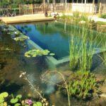 natural pool designs photos